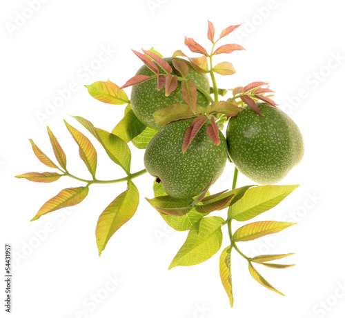Green walnuts with leaves isolated on a white background.