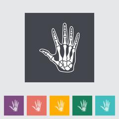 Anatomy hand