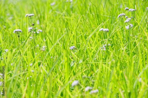 Fototapeten,gras,grün,feld,abstrakt