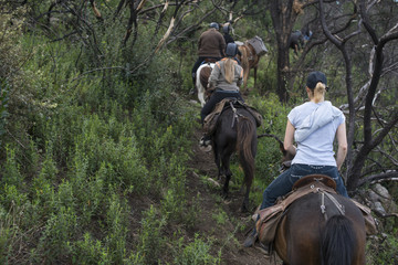 People horse ridding in the forest