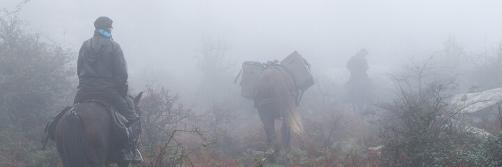 People horse ridding in a misty forest