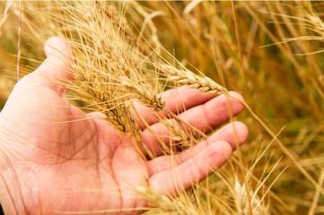 grano nella mano