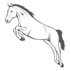 Jumping horse isolated on white background