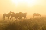 Horses in the fog