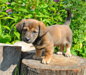 Cute a puppy of rate is on the stump of sunny canicular day