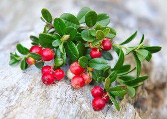 Berries of wild cowberry (Vaccinium vitis-idaea)