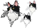 Tuxedo cat with whacky whiskers poster