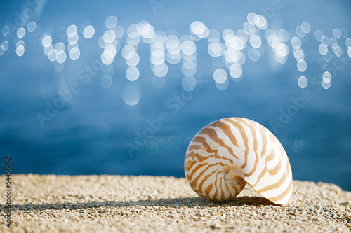 nautilus seashell  and ocean