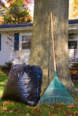 Raking Leaves Bag and Rake by Tree