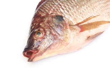 head of fresh raw Tilapia fish on white background