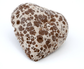 Isolated Heart Shaped Moldy Chocolate