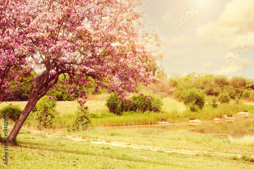 Beautiful tree blossom landscape