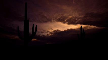 Arizona Saguaro dusk