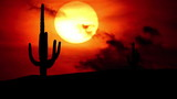 Arizona Saguaro sunset