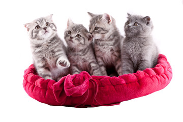 Group of kittens.