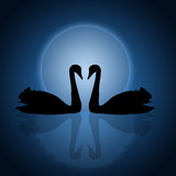 Two swans under the blue sunset