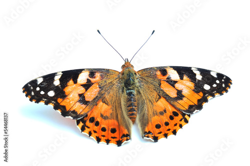 Painted Lady (Vanessa cardui) isolated on white