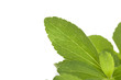 Stevia, sweetleaf.
