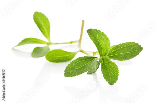 Stevia sugarleaf isolated.