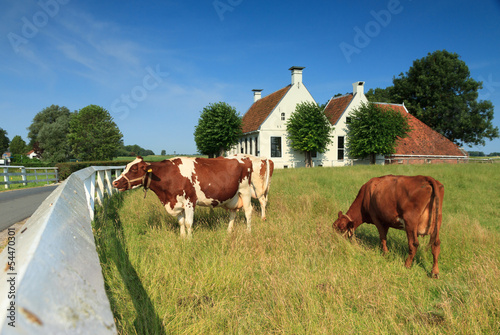Cows in front of a farm