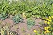 huerto ecológico y selección de plantas