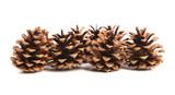 Row of pine cones.