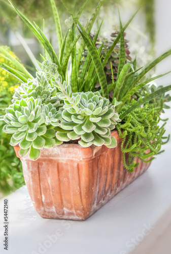 Sedum and sempervivium plants
