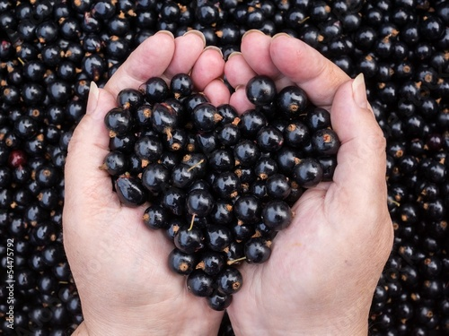 Black currants held by woman hands shaping a heart