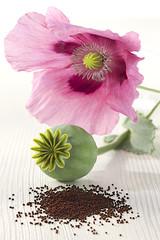 PAVOT - Fleur, Capsule et Graines