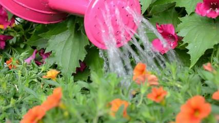 Gießen von Sommerblumen