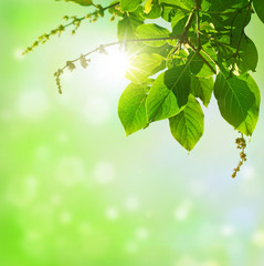 natural green background  .