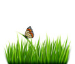 Nature background with green grass and a butterfly. Vector.