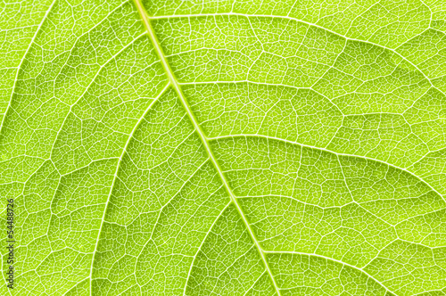 Close-up texture of a green leaf, background.