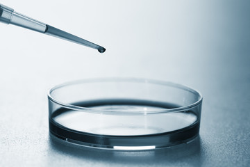 pipette and petri dish