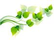 Grüne Zweige mit Laub