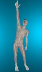 Uomo ai raggi x braccio alzato