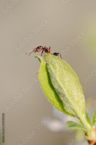 Ant on a green leaf