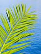 Fresh green palm leaf above blue sea water