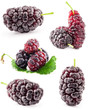 Collection of Mulberry isolated on white background
