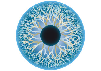 blue human eye, vector