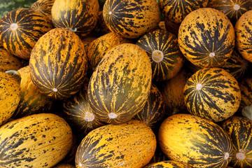 türkische zuckermelonen
