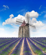Blossoming lavender field with wind mill and beautiful blue sky