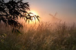 morning sunshine, winmdill silhouette and fog