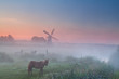 pony in fog on pasture and windmill