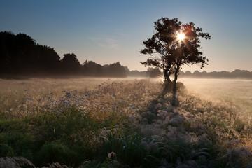 star sunbeams through tree