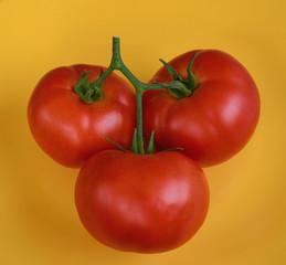 Tomato 21