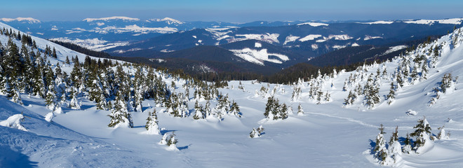 Winter forest in the mountain valley. Beautiful winter landscape