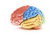 Colored sections of a human brain on a white background.
