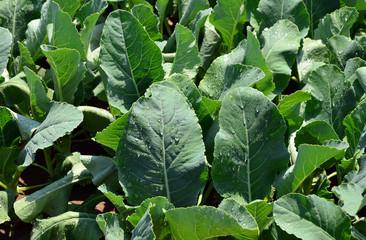 Vegetables 30