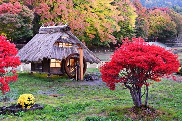 Huts and fall foliage in Japan
